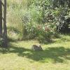 Kaninchen Besuch im Garten